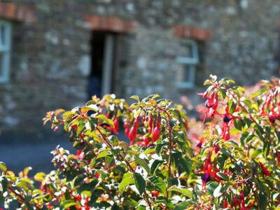 Straand Meisie, Location Maison à St Davids - Photo 5 / 25