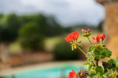 Maison fabuleuse, Location Maison à Loubejac - Photo 25 / 40