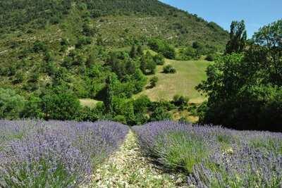Villa Carpentras, Location Villa à Carpentras - Photo 26 / 33