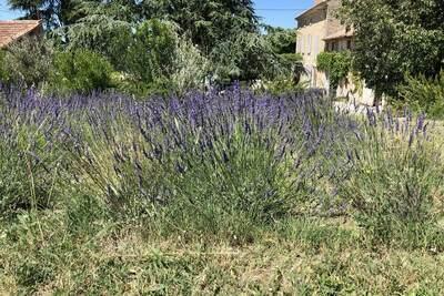le Mas Pausadou, Location Villa à Carpentras - Photo 42 / 45