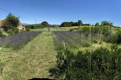 le Mas Pausadou, Location Villa à Carpentras - Photo 43 / 45