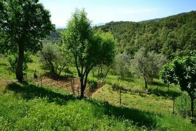 Trebbiano, Location Maison à Figline E Incisa Valdarno - Photo 29 / 34