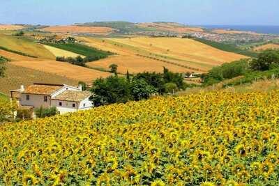 Ferme boutique avec piscine sur la côte Adriatique