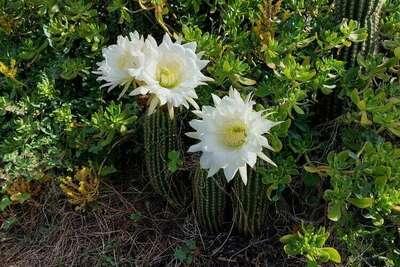 Au bord de L'Orb, Location Villa à Roquebrun - Photo 24 / 42