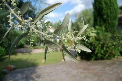 Au bord de L'Orb, Location Villa à Roquebrun - Photo 37 / 42
