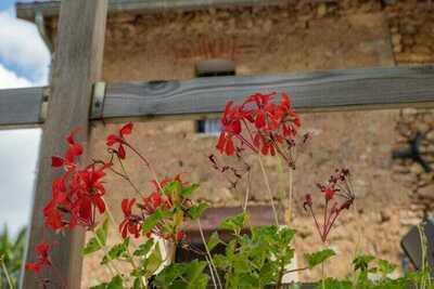 Location Maison à Saint Cernin de l'Herm - Photo 31 / 39