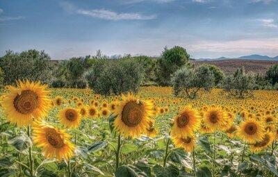Al Vecchio Mulino, Location Maison à Lorenzana (PI) - Photo 14 / 21